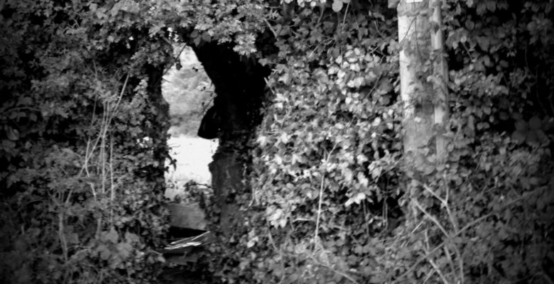 009: Leverets Through The Hole In The Hedge